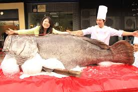 fish bigger