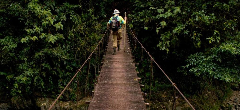Rainforest-Hiker-2-NYT-1200x550