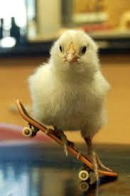 chick-on-skate